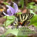 奇跡に気づける奇跡~ギフチョウの法則~
