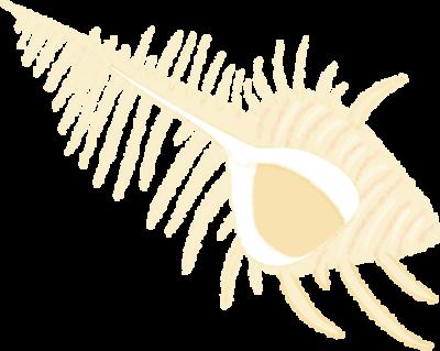 190828 アッキガイのイラスト