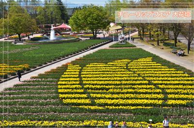となみチューリップフェアー大花壇の写真