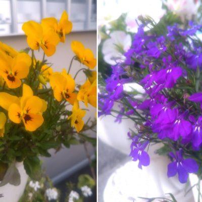 花壇の花の写真
