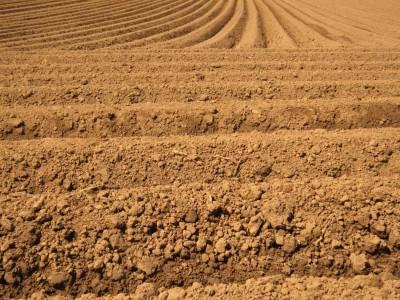 20181231土壌の写真(ダークの色の意味)
