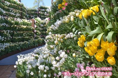 となみチューリップフェア花の大谷の写真